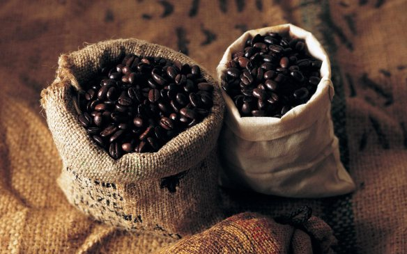 arabica_catura_coffee_bean