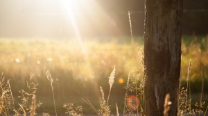 field-summer-sun-meadow-large