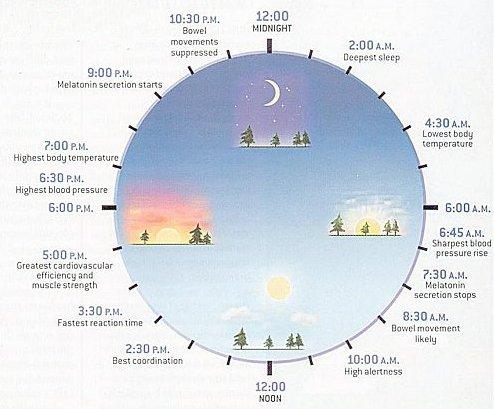 circadian_clock.jpg