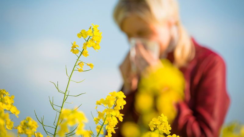 Avoiding Hay Fever: Making a Healthy Transition from Summer to Fall