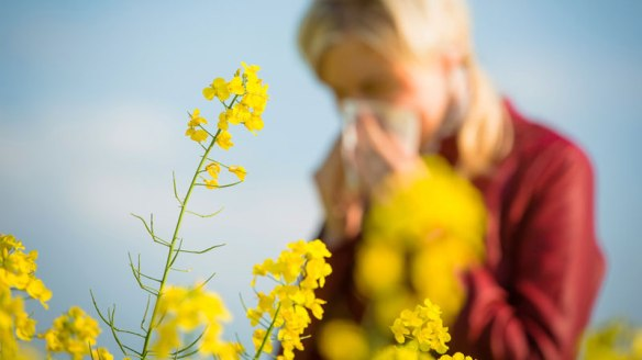 Hay-Fever.jpg